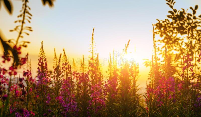 Wiese der wilden Blume durch Sonnenlicht lizenzfreies stockfoto