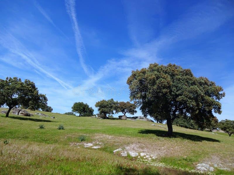 Wiese in Extremadura lizenzfreie stockfotografie