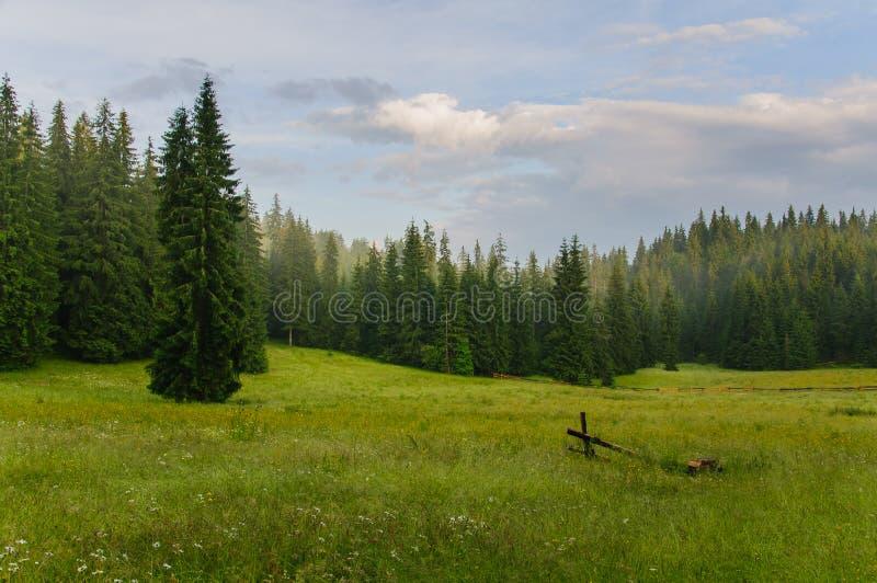 Wiese mit Bäumen stockbild