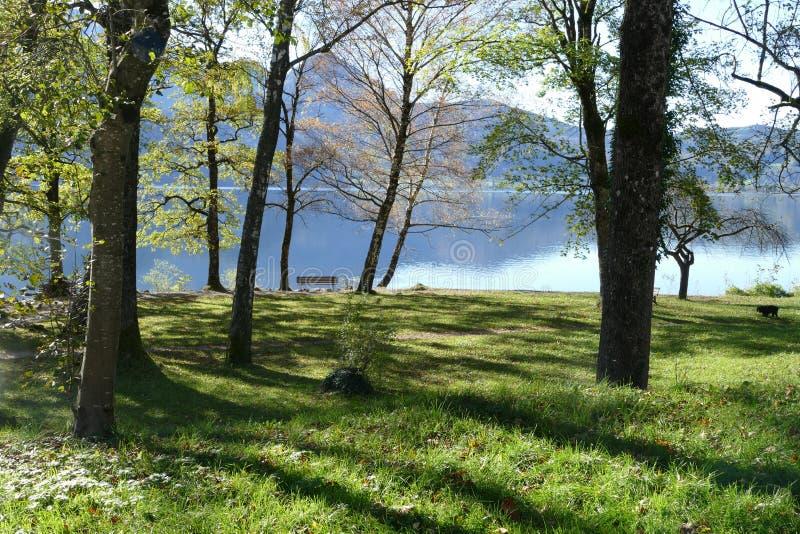 Wiese mit Bäumen und Parkbank auf einem blauen Gebirgssee stockbilder