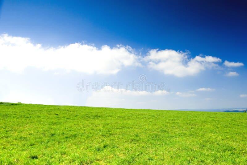 Wiese mit blauem freiem Himmel. stockfotografie