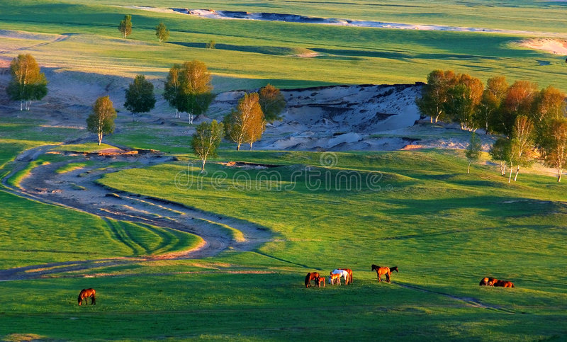 Wiese morgens stockfoto