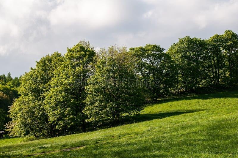 Wiese und Bäume lizenzfreie stockbilder