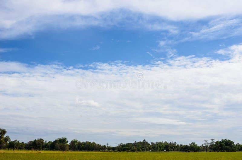 Download Wiese und blauer Himmel stockbild. Bild von serenity - 26359401
