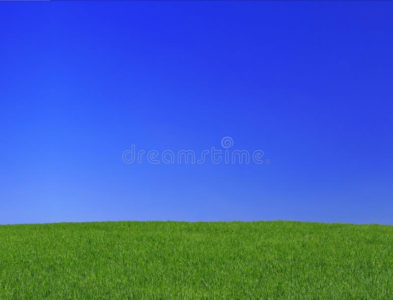 Wiese und Himmel stockfoto
