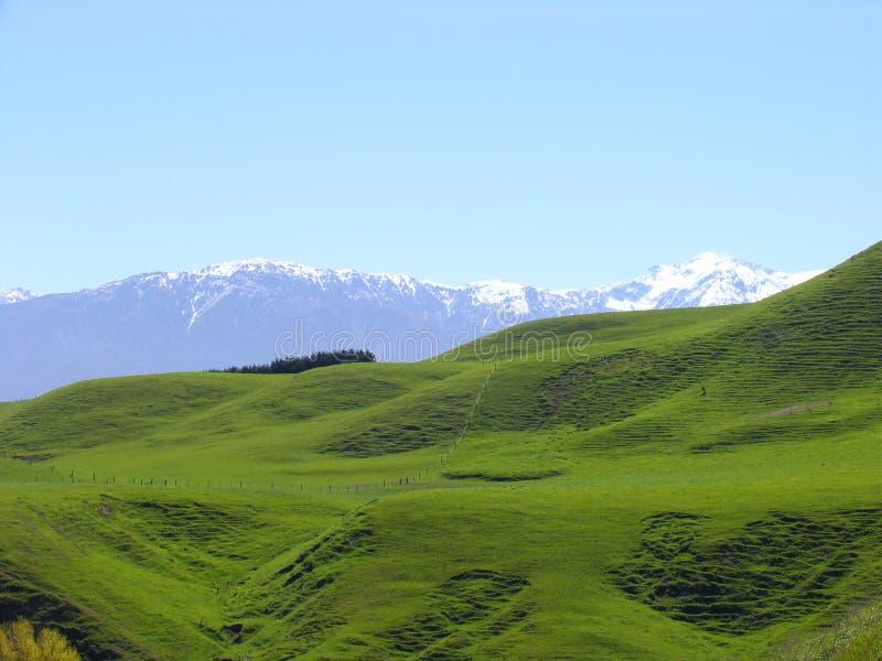 Wiese-und Schnee-Berg lizenzfreie stockbilder