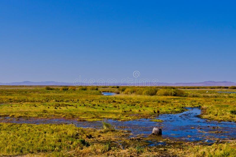 Wiese und Sumpfgebiet lizenzfreies stockbild
