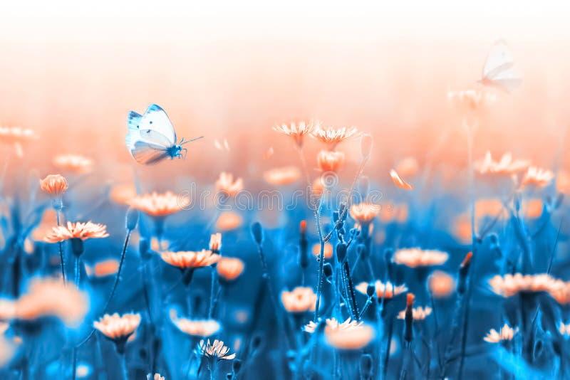 Wiese voll des gelben Löwenzahns Orange Blumen und Schmetterling auf einem Hintergrund von blauen Blättern und von Stämmen Künstl stockfoto
