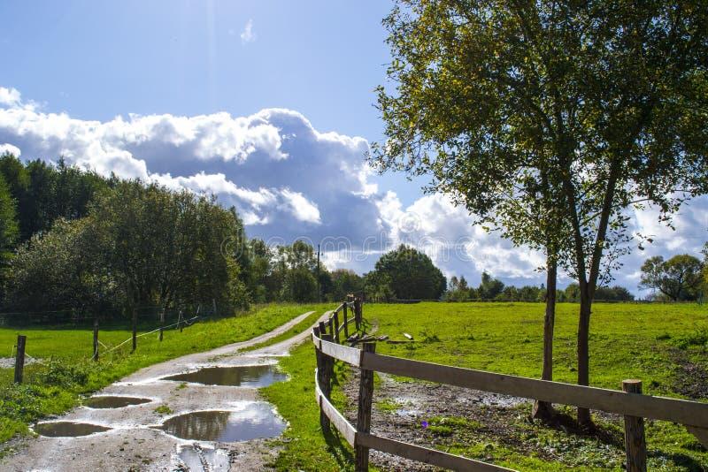 Wiesen mit Weiden, Polen lizenzfreies stockbild