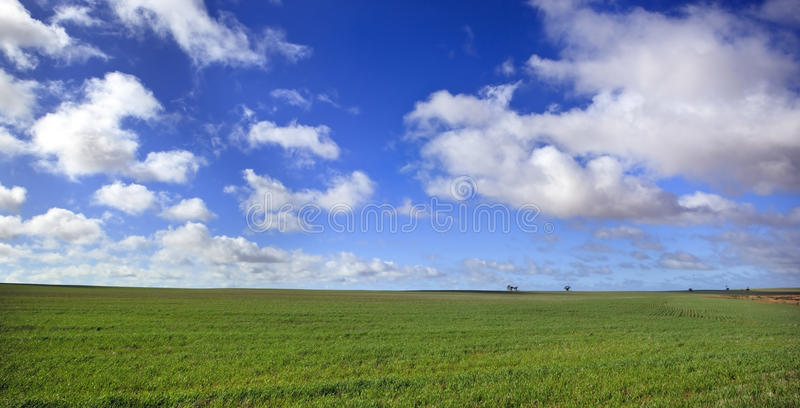 Wiesen-Panorama stockbild
