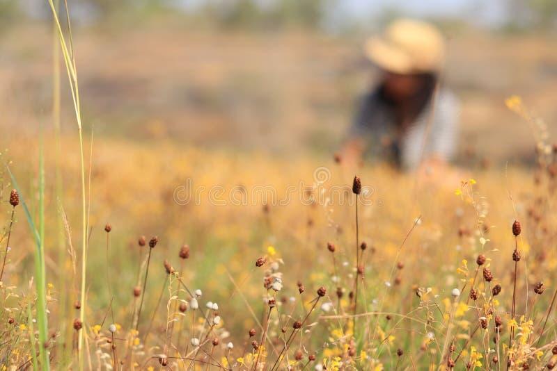 Download Wiesen und Blumen stockfoto. Bild von asiatisch, mädchen - 96929358