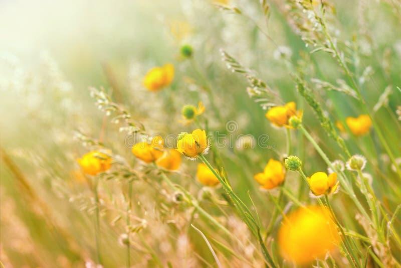 Wiesenblumen im Gras stockfotografie