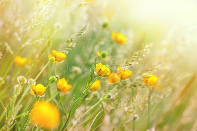 Wiesenblumen und -gras stockbild