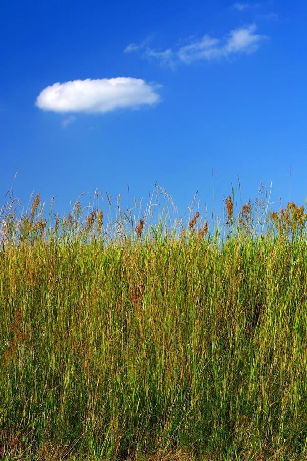 Wiesengras und ein blauer Himmel stockfotografie