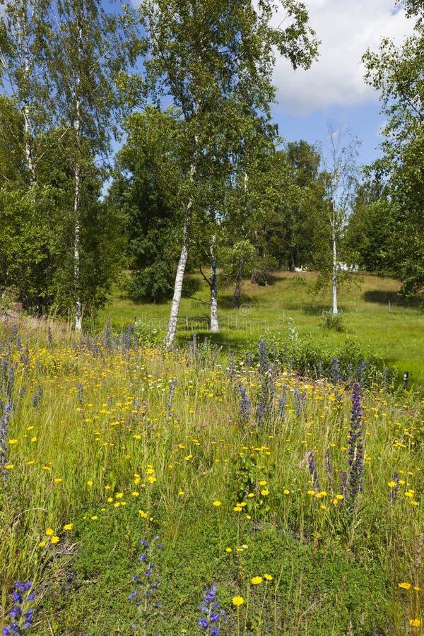Wiesenlandschaft stockbilder