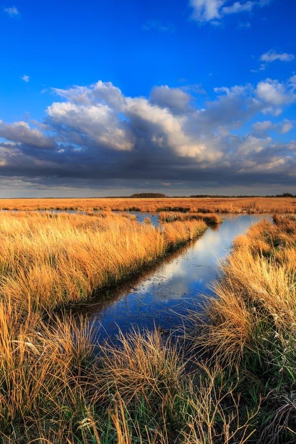 Wiesenlandschaft mit schönem cloudscape lizenzfreie stockbilder