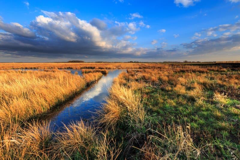 Wiesenlandschaft mit schönem cloudscape lizenzfreie stockfotos