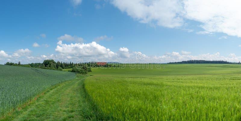 Wiesenweg durch grüne Getreidefelder lizenzfreies stockbild