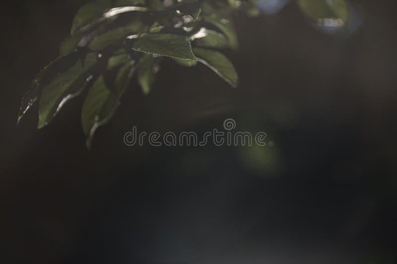 Wieszać Rozgałęzia się na Mgławym lata popołudniu w parku obraz stock