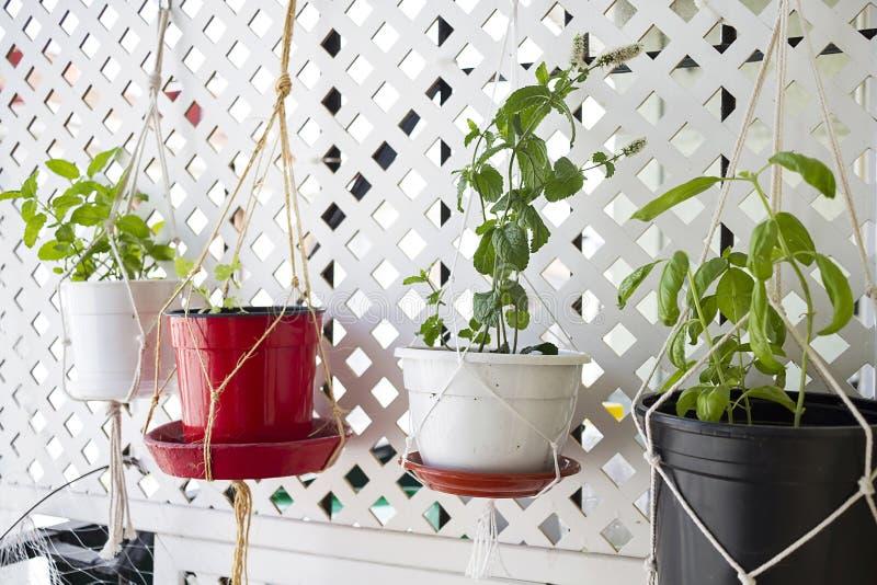 Wieszać garnki z aromatycznymi ziele zdjęcie stock