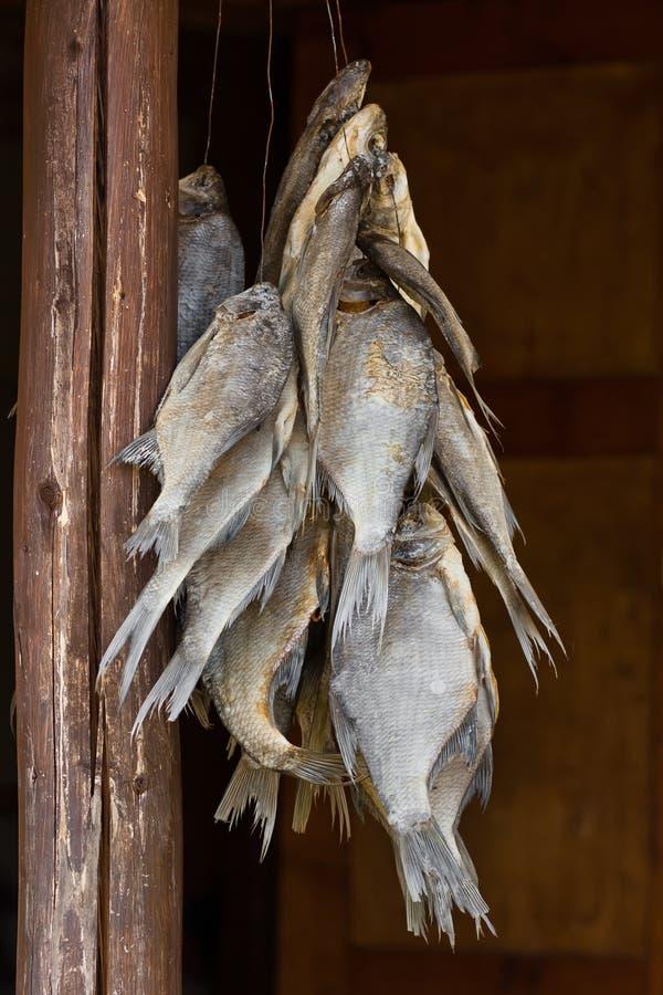 Wieszać suszącej ryba obraz royalty free