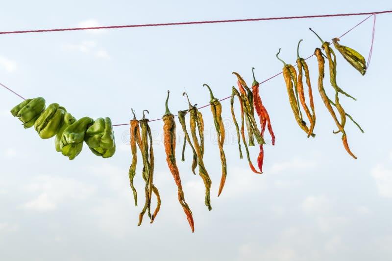 Download Wieszający Susi Zieleni Chili Pieprze Zdjęcie Stock - Obraz złożonej z wieszający, dużo: 57660244