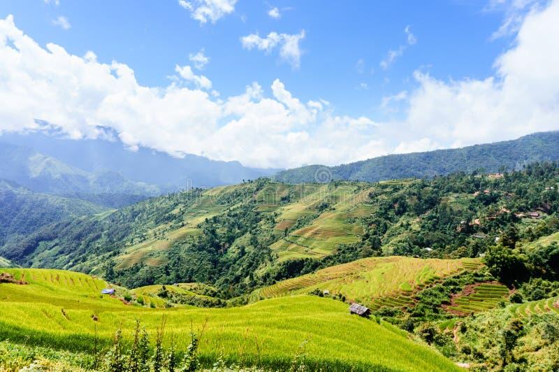 Wietnam krajobraz: Rice tarasy przy Mu Cang Chai, jen Bai, Wietnam zdjęcie stock