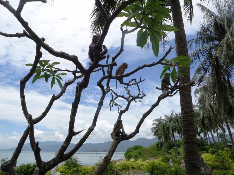 Wietnam, Małpia wyspa, Maj 2017 zdjęcia royalty free