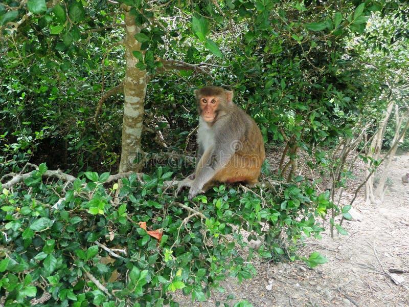 Wietnam, Małpia wyspa, Maj 2017 obraz royalty free
