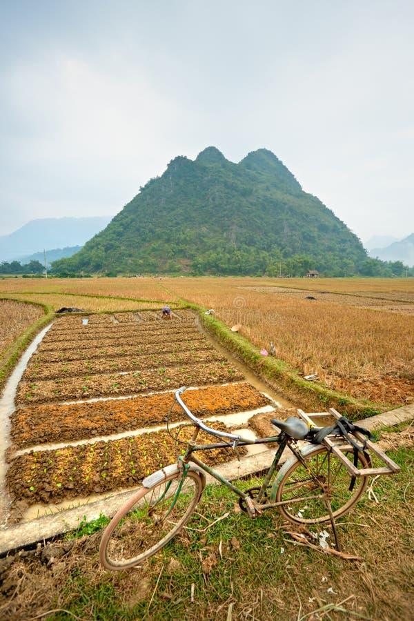 Wietnamczyka północny Krajobraz. zdjęcia stock