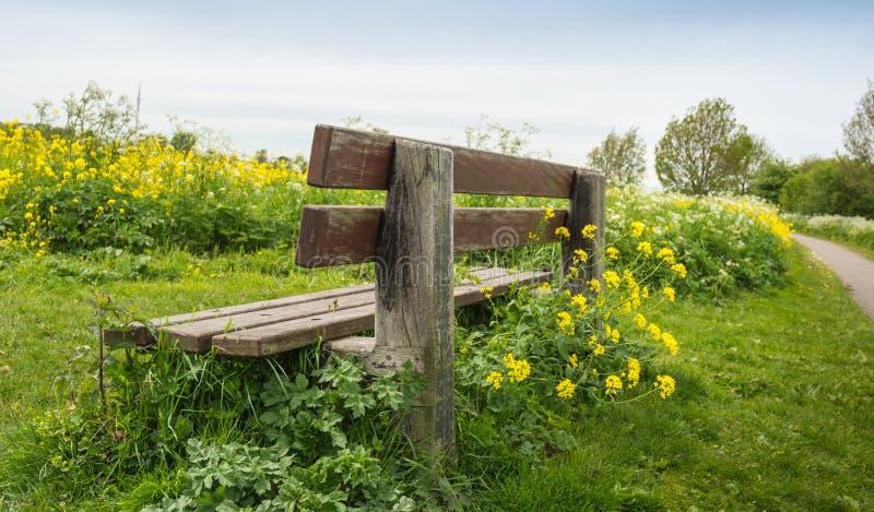 Wietrzejąca drewniana ławka widzieć od zadka obrazy royalty free