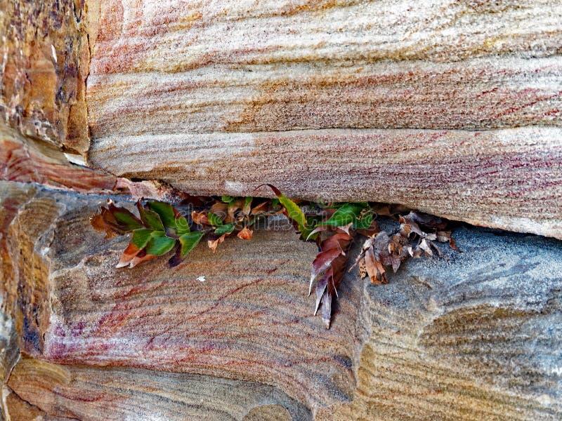 Wietrzejąca Piaskowcowa Naturalna skały ściana zdjęcie royalty free