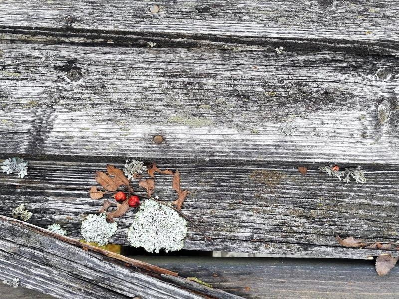 Wietrzejący drewniany dach z mech, liszajem, liściem i rowan w zbliżeniu, zdjęcia royalty free