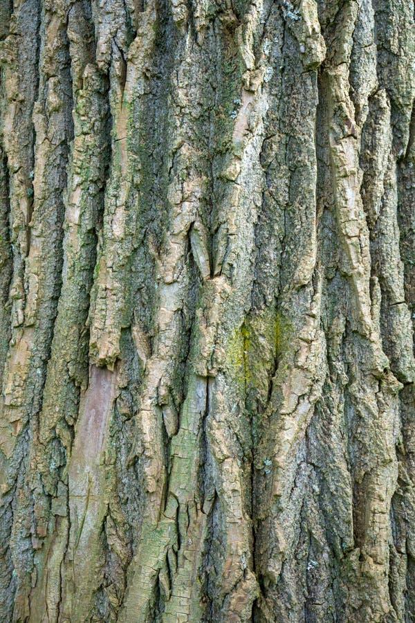 Wietrzejący drzewny bagażnik textured tło fotografię, obrazek zdjęcia stock