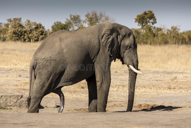 Wieviele Beine hat der Elefant? stockfoto