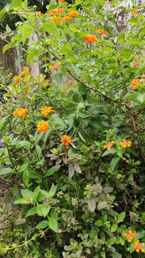 Wieviele Flüsse des Mannes, die Natur kennen können, wie die schönen Blumen von mir als children& x27 schön sind; s lizenzfreies stockfoto