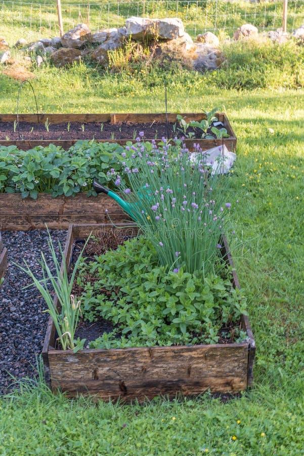 Wiew весны над культивировать коробки в зеленом саде стоковое фото rf