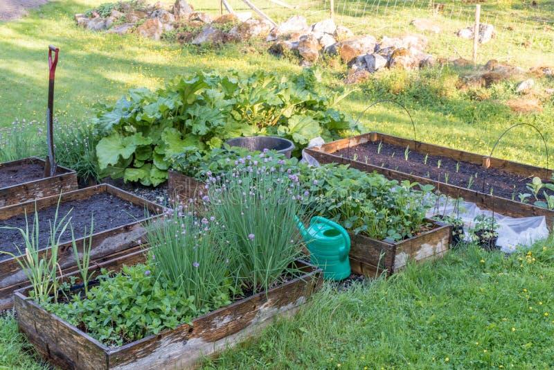 Wiew весны над культивировать коробки в зеленом саде стоковые фото