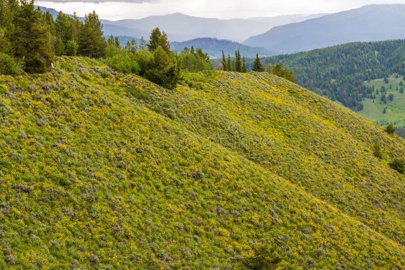 Wiew av den förstenade skogen i den Yellowstone nationalparken med träd och grönt gräs royaltyfri bild