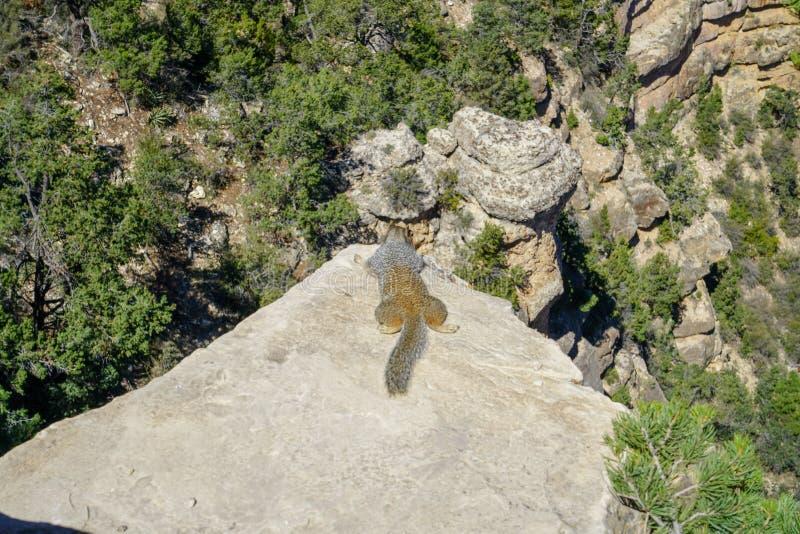 Wiewiórka przy uroczystego jaru parkiem narodowym obraz stock