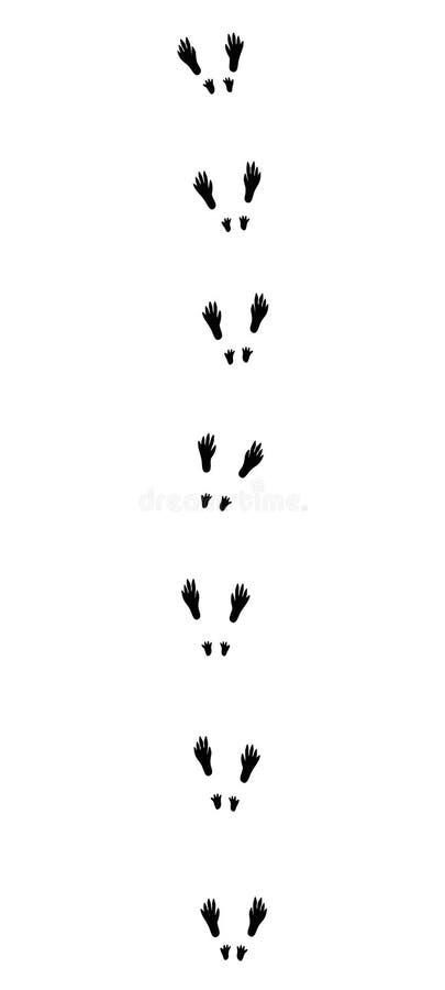 Wiewiórka Tropi Czarnych odciski stopy ilustracja wektor
