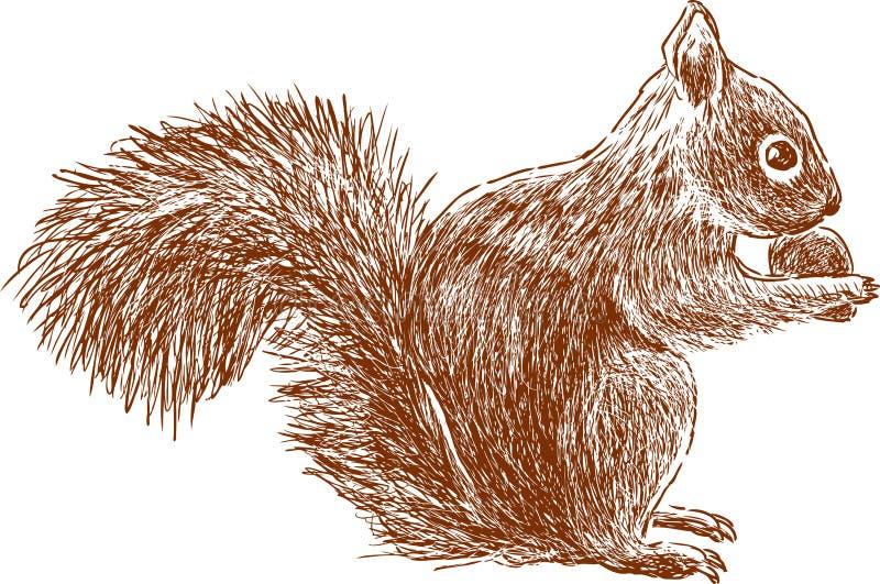 Wiewiórka z dokrętką ilustracja wektor