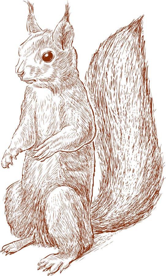 Wiewiórka z puszystym ogonem royalty ilustracja