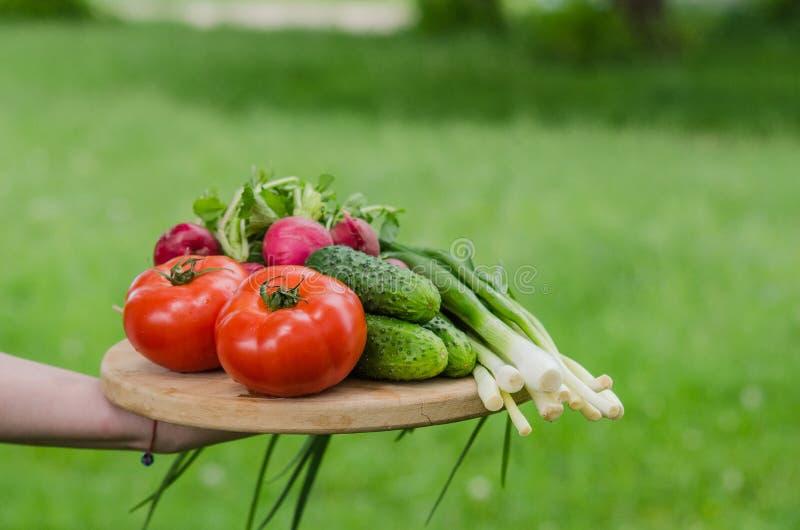 ?wiezi surowego warzywa sk?adniki dla zdrowy kulinarnego lub sa?atka robi z nieociosan? drewno desk? w centrum, odg?rny widok, ko fotografia stock