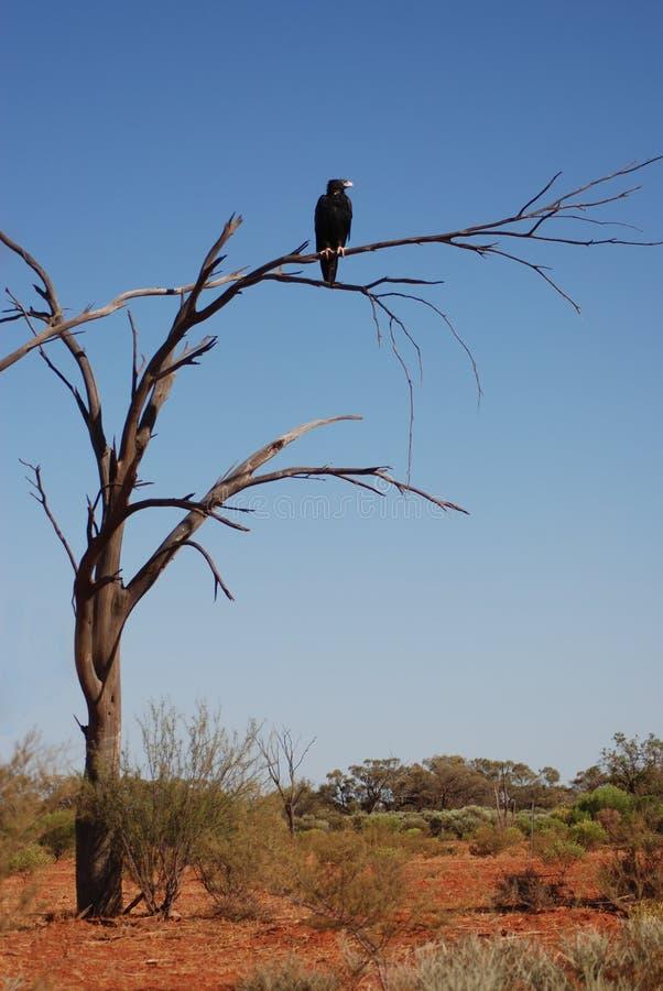 Wig-de steel verwijderde van adelaar op een droge boom royalty-vrije stock foto