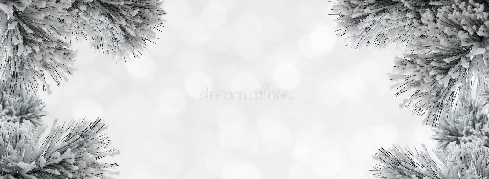 Winter background with snow-covered pine branches. Wihite winter background with snow-covered pine branches and bokeh. Christmas backdrop royalty free stock photo