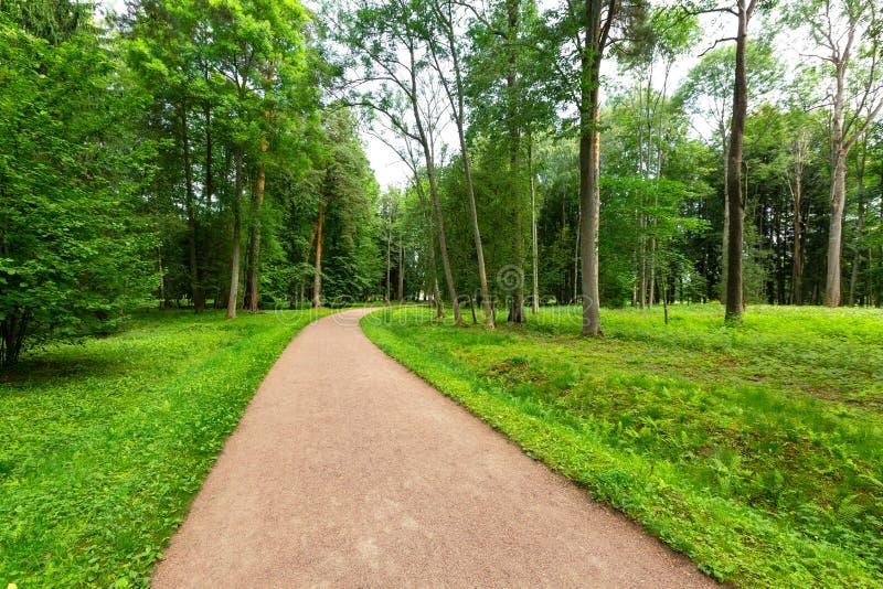 Wijąca ścieżka przez spokojnego zielenistego parka z gazonem i wysokimi zielonymi drzewami w letnim dniu dla chodzić i relaksować obraz royalty free