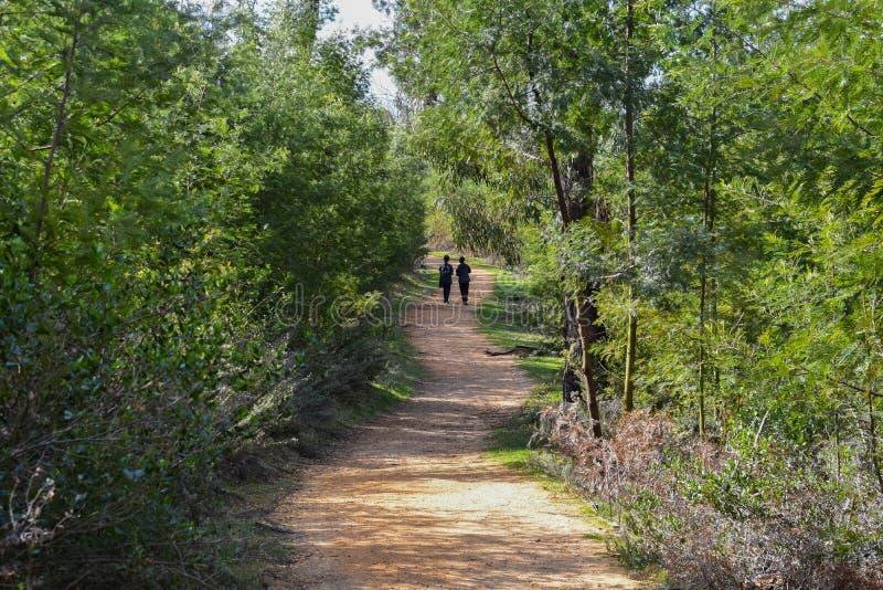 Wijąca ścieżka z dwa dziewczyn chodzić zdjęcie royalty free