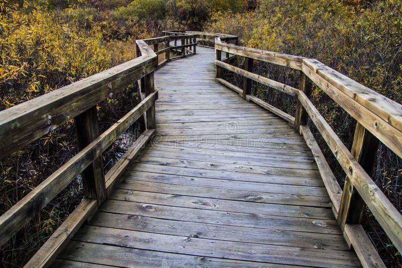 Wijąca Boardwalk ścieżka Przez bagien zdjęcie royalty free