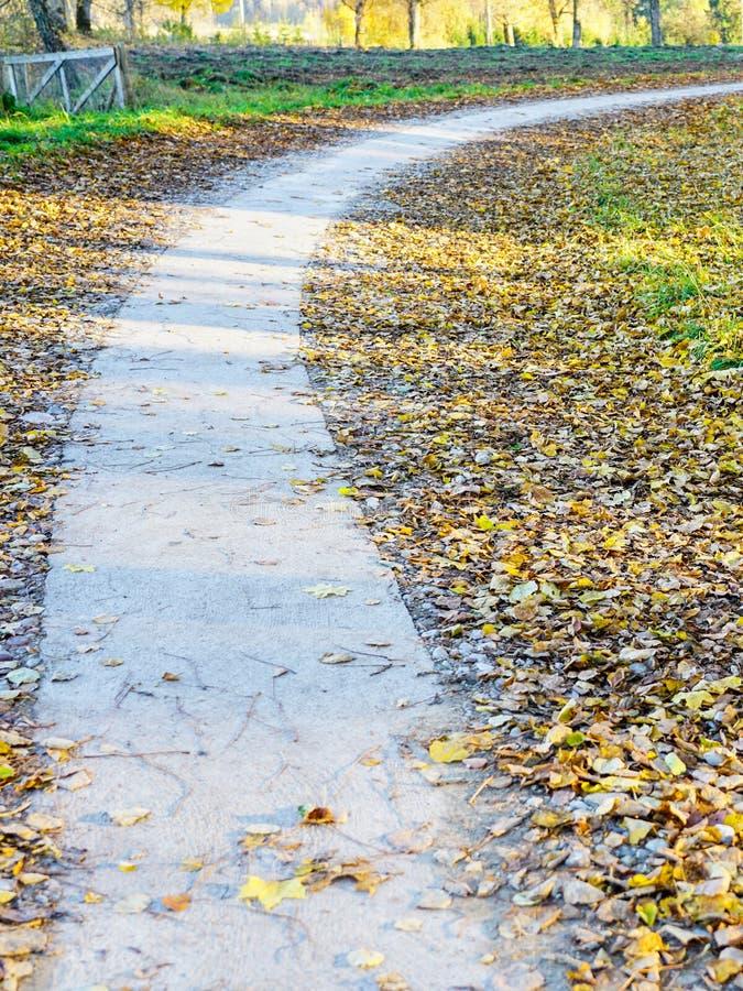 Wijąca chodząca ścieżka natura park w spadku zdjęcie stock